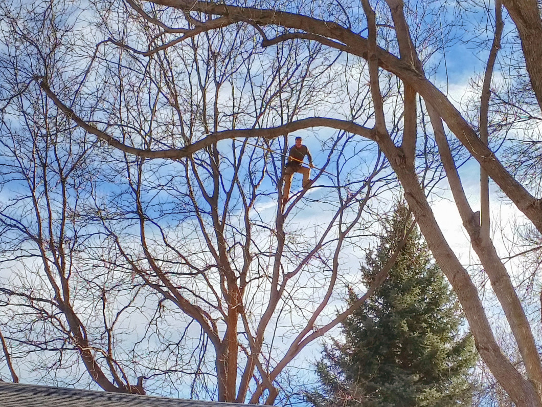 Tree Pruning in Fort Collins, CO